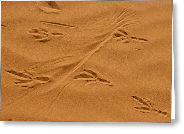 Roadrunner Tracks In The Sand Greeting Card by Michael Melford