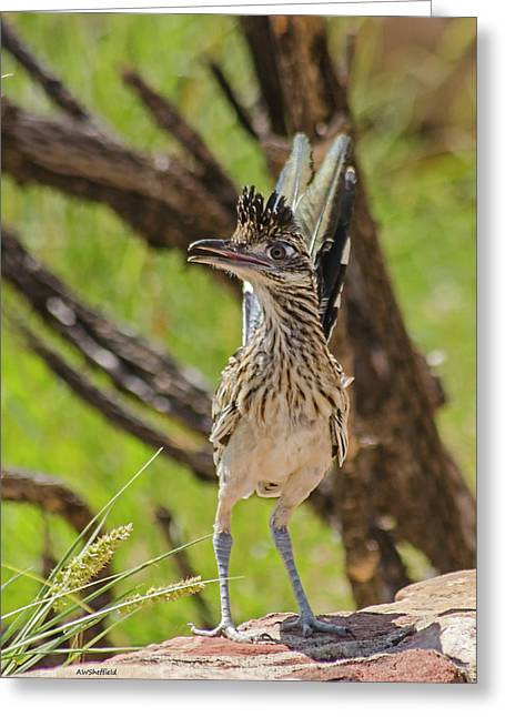 Roadrunner - Youngster Greeting Card