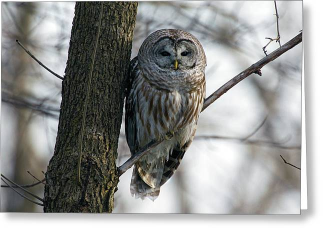 Roadside Barred Owl Greeting Card