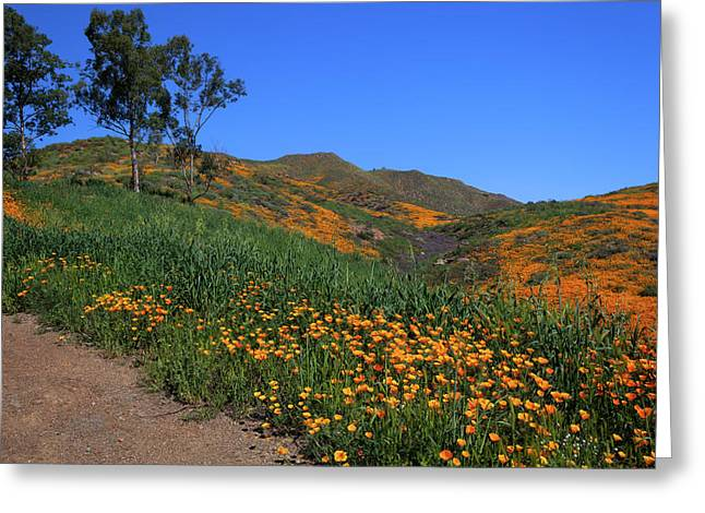 Greeting Card featuring the photograph Roadside Color by Cliff Wassmann
