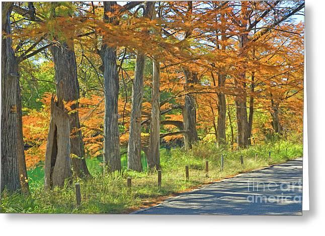 Roadside Cypress Greeting Card