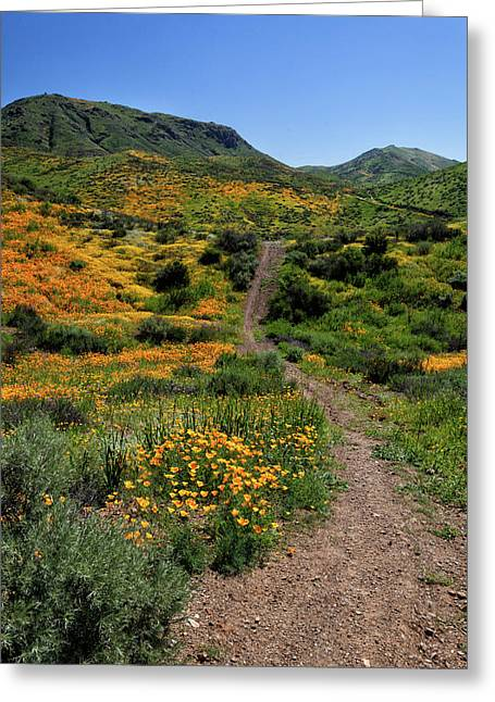 Greeting Card featuring the photograph Roadside Flowers by Cliff Wassmann