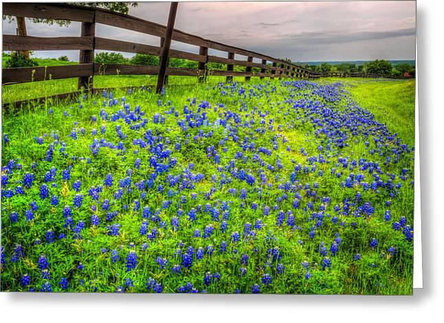 Roadside Texas Bluebonnets Greeting Card by David and Carol Kelly