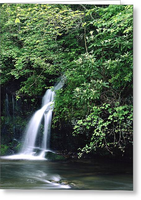 Roadside Waterfall Smoky Mountains Greeting Card by Tony Ramos