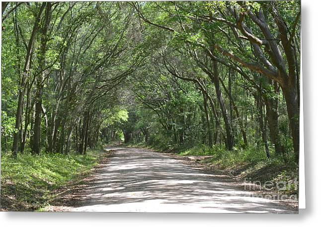 Greeting Card featuring the photograph Roadway To Mitchellville Beach by Carol  Bradley