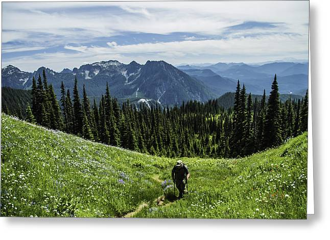 Roaming Above The Trees. Greeting Card