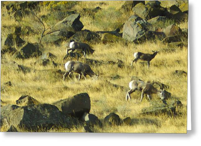 Greeting Card featuring the photograph Roaming Free by Dale Stillman