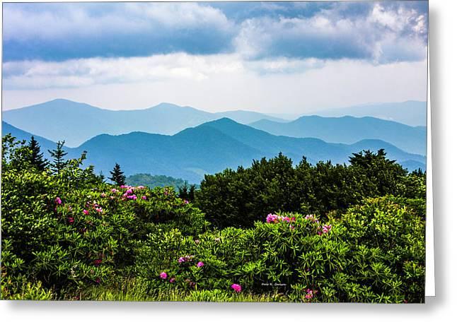 Roan Mountain Rhodos Greeting Card