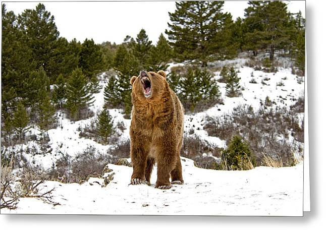 Roaring Grizzly In Winter Greeting Card