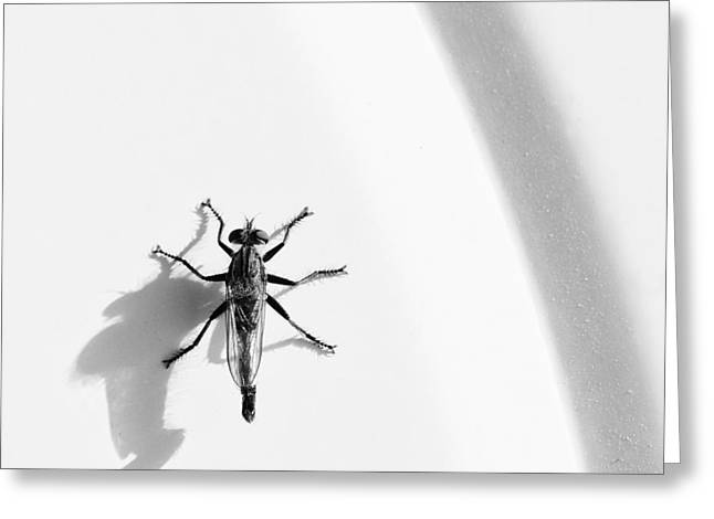 Robber Fly On Lawn Chair Greeting Card