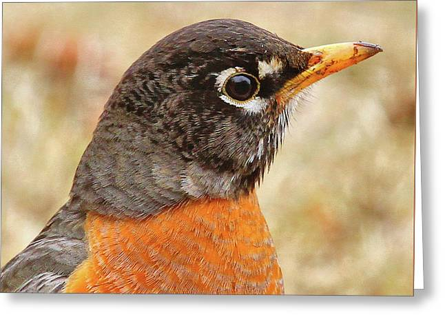 Greeting Card featuring the photograph Robin by Debbie Stahre