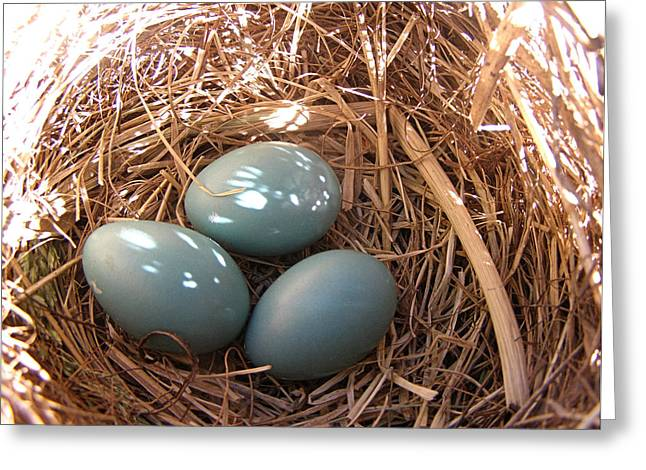 Greeting Card featuring the photograph Robin Eggs by Angie Rea