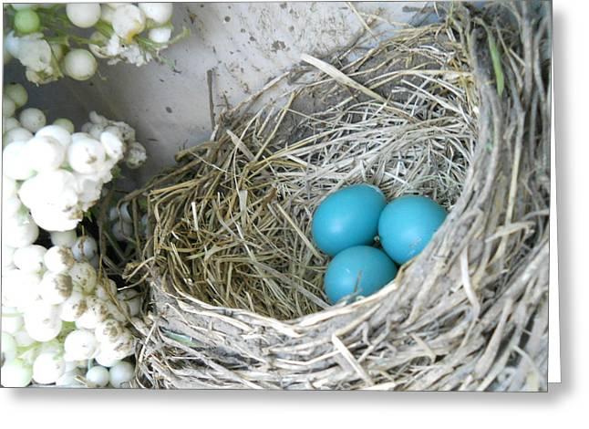 Robin Eggs In A Wreath Greeting Card by Marqueta Graham