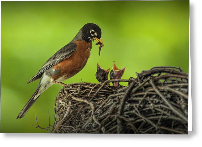 Robin Feeding It's Young In A Nest Greeting Card by Randall Nyhof