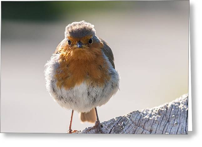 Robin Front Greeting Card