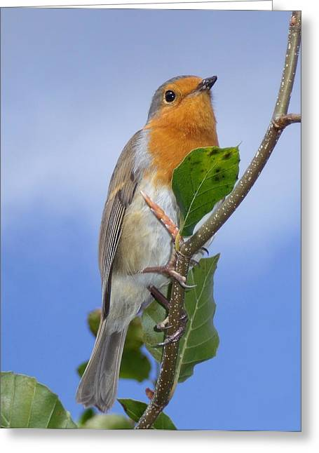 Robin In Eden Greeting Card