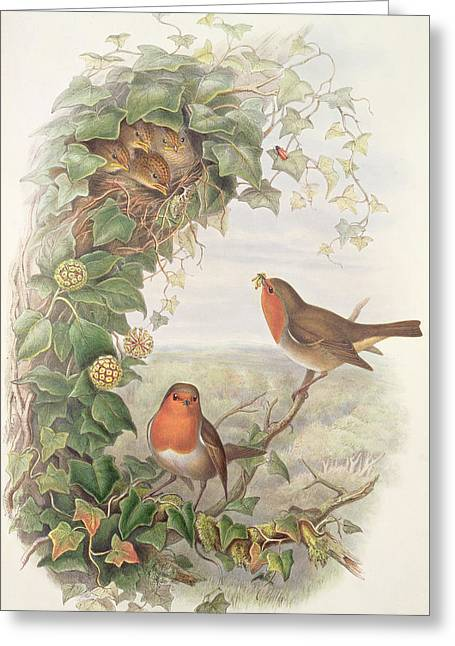 Robin Greeting Card by John Gould