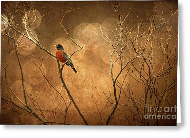 Robin Greeting Card by Lois Bryan