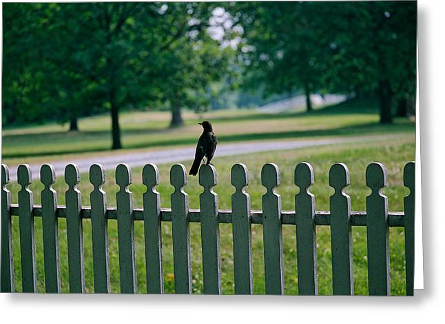 Robin On A Fence Greeting Card by Lone Dakota Photography