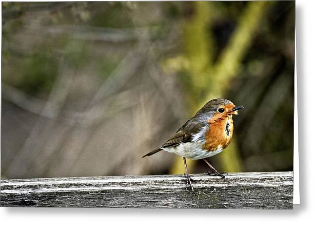 Greeting Card featuring the photograph Robin On Fence by Cliff Norton
