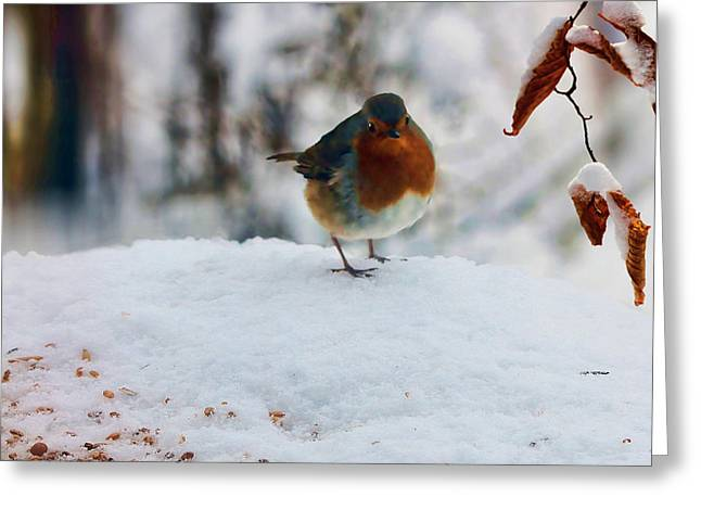 Robin Redbreast Greeting Card