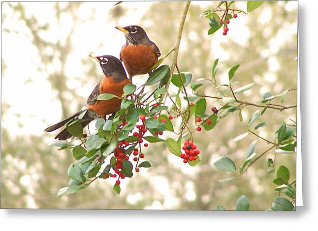 Greeting Card featuring the photograph Robins In Holly by Peg Urban