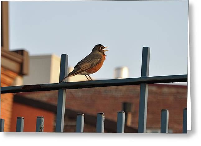 Robins Song Greeting Card by Bill Cannon