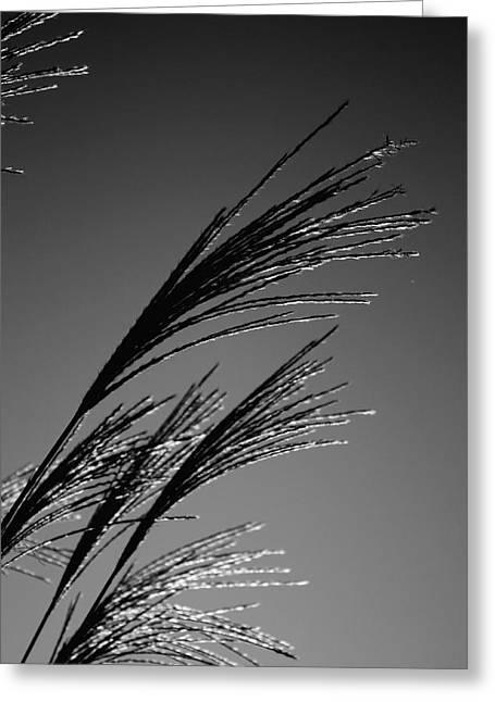 Robinwood Grasses Greeting Card by Kristen Vota