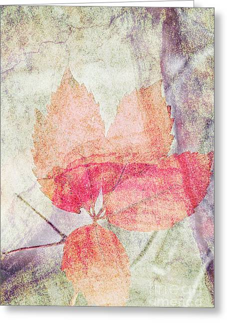 Greeting Card featuring the photograph Rock And Leaf Composite 2 by Elaine Teague