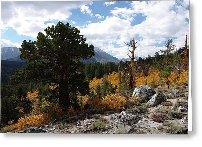 Rock Creek Shrub Aspens Eastern Sierra Greeting Card