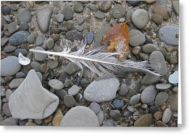 Rock Feather Shell Leaf Greeting Card