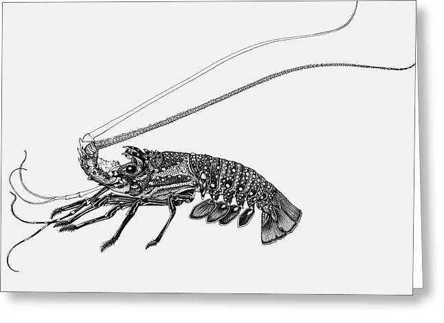 Rock Lobster Greeting Card