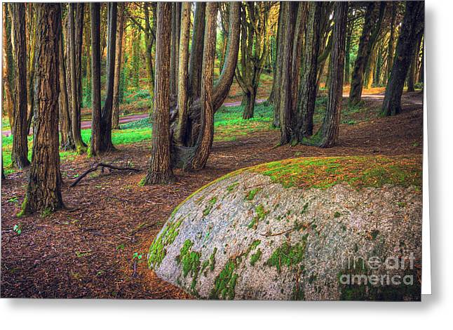 Rock On Woods Greeting Card
