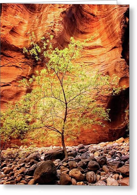 Greeting Card featuring the photograph Rock Tree by Scott Kemper