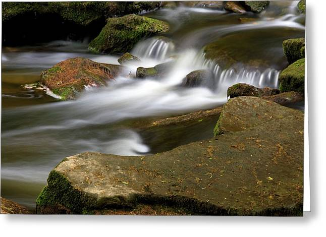 Rock Water And Moss Greeting Card by Timothy McIntyre