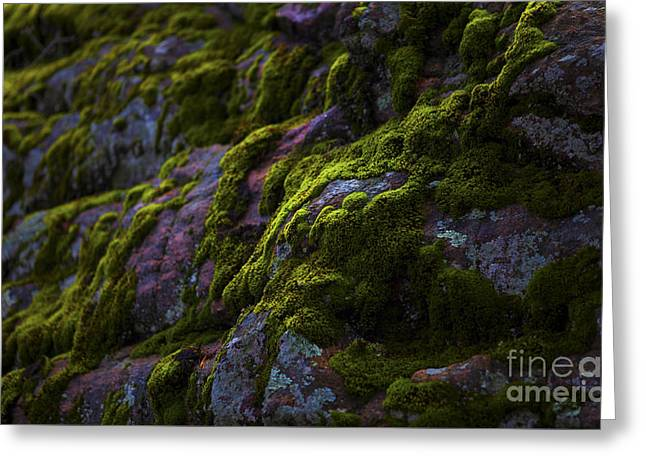 Rock With Green  Greeting Card by Barbara Schultheis