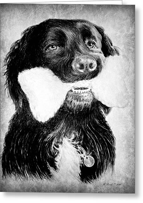 Rockie Greeting Card by Andrew Read