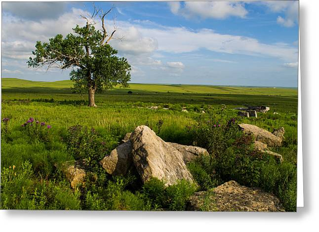 Greeting Card featuring the photograph Rocks And Cottonwood 1 by Jeff Phillippi