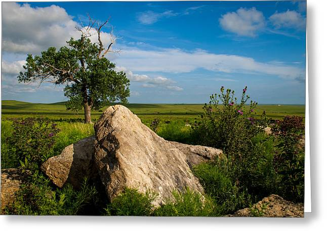 Greeting Card featuring the photograph Rocks And Cottonwood 2 by Jeff Phillippi