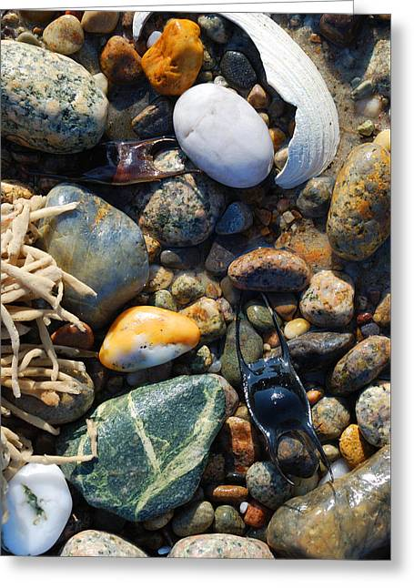 Rocks And Shells On Sandy Neck Beach Greeting Card