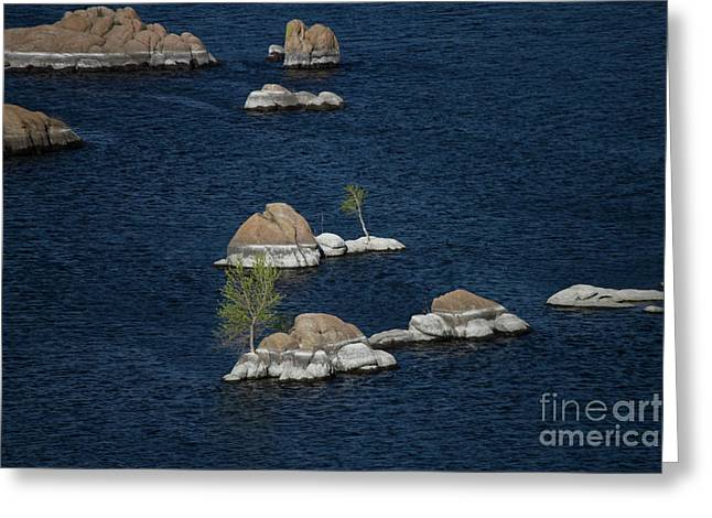 Turtles A Rabbit And Rocks Greeting Card by Anne Rodkin