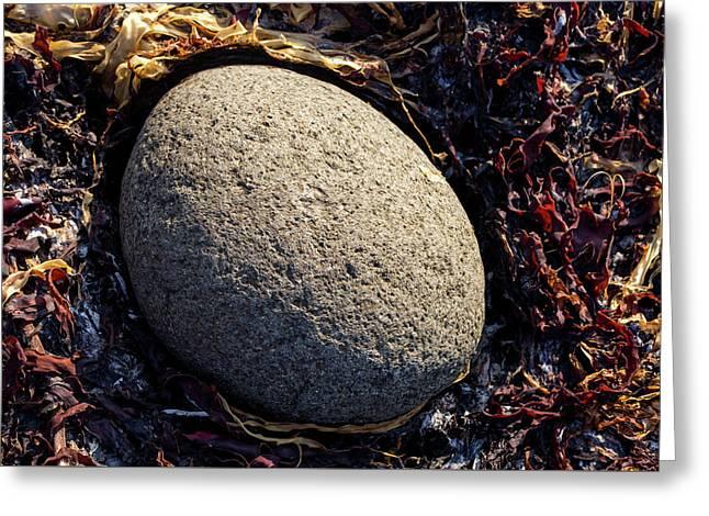 Rocks From Talisker Beach 4 Greeting Card by Davorin Mance