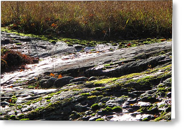 Rocks Moss And Grass 2  Greeting Card by Lyle Crump