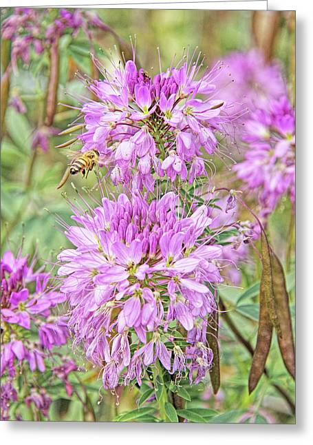 Greeting Card featuring the photograph Rocky Mountain Bee Plant by Jennie Marie Schell