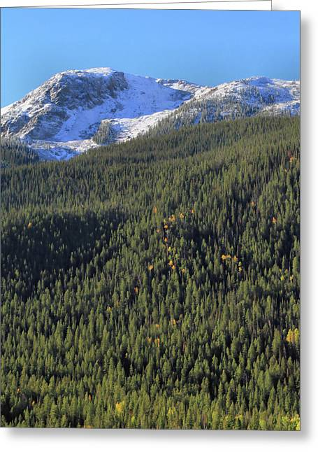 Greeting Card featuring the photograph Rocky Mountain Evergreen Landscape by Dan Sproul