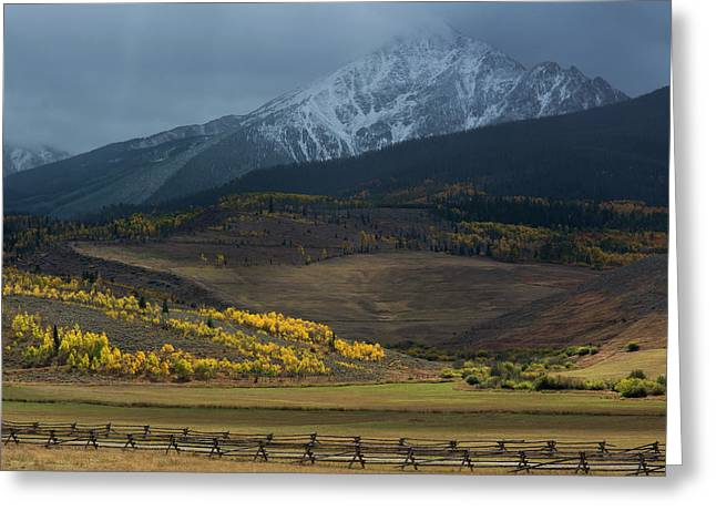 Greeting Card featuring the photograph Rocky Mountain Horses by Aaron Spong