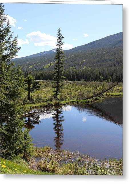 Rocky Mountain Np Beaver Ponds Greeting Card by Christiane Schulze Art And Photography