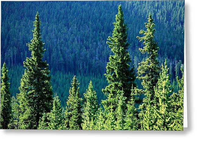 Rocky Mountain Skyline Greeting Card by Todd Klassy