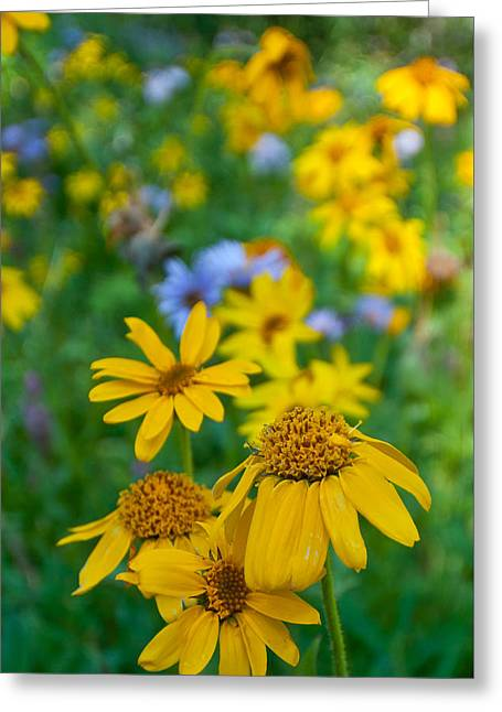 Greeting Card featuring the photograph Rocky Mountain Wildflowers by Cascade Colors