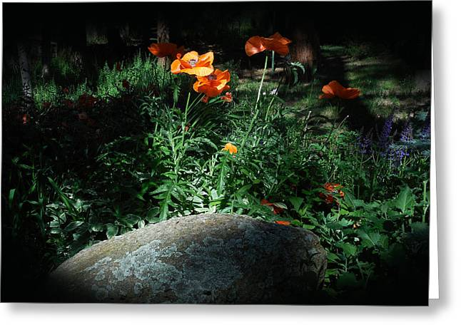 Rocky Mt. Poppies  Greeting Card